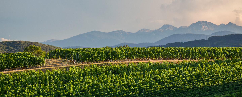 Domaine de Baronarques - Languedoc