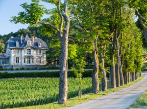 Domaine de Baroanrques Vin rouge Languedoc Limoux