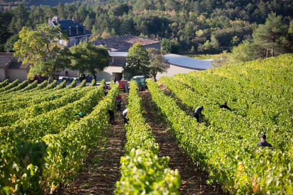 Domaine de Baronarques red wine Limoux languedoc 2016