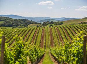 Vignes Domaine de Baronarques Liimoux
