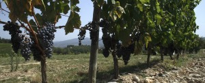 photo7-terroir